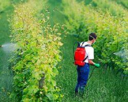 16 Ekim Dünya Gıda Günü: Tek Yol Gıdamıza Sahip Çıkmak